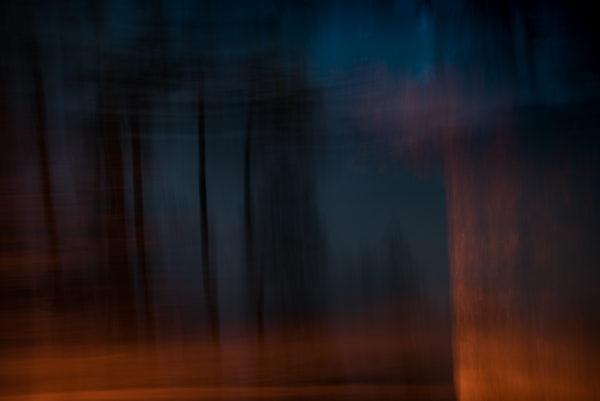 Forrest night