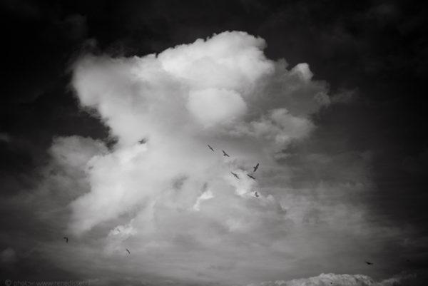 _DSC5071birds_LRdisfoto