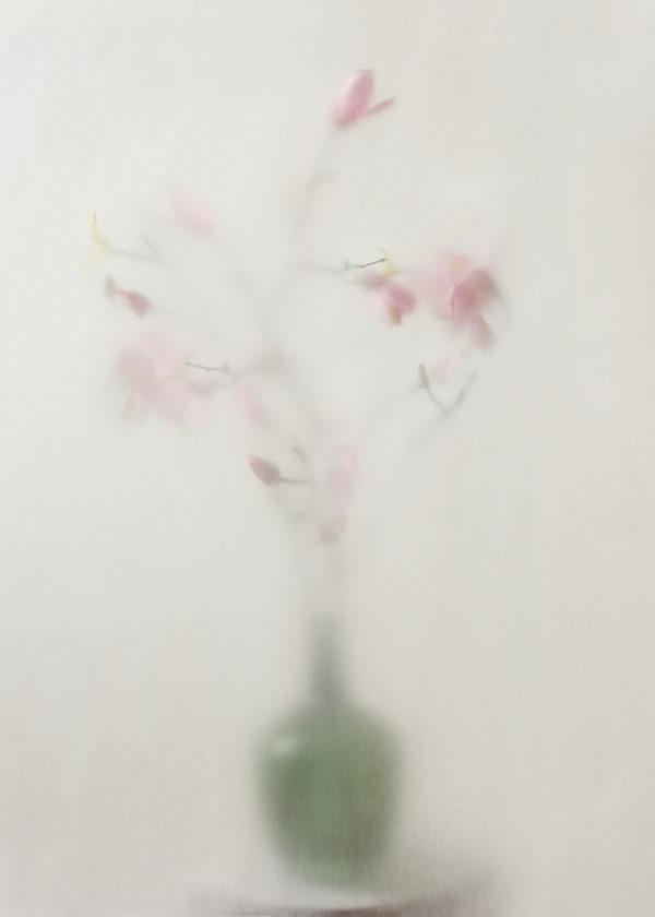 Magnolia c1-Edit