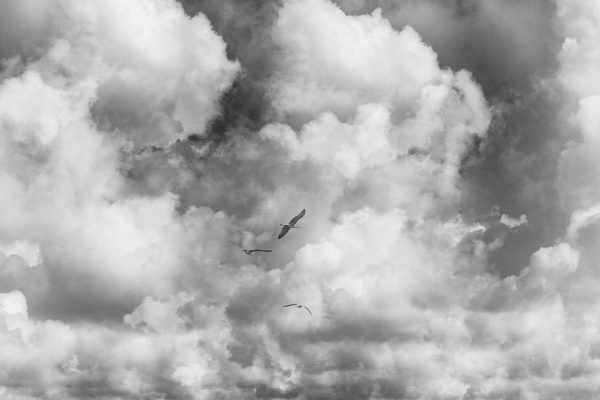 seagulls clouds (1 van 1)-2